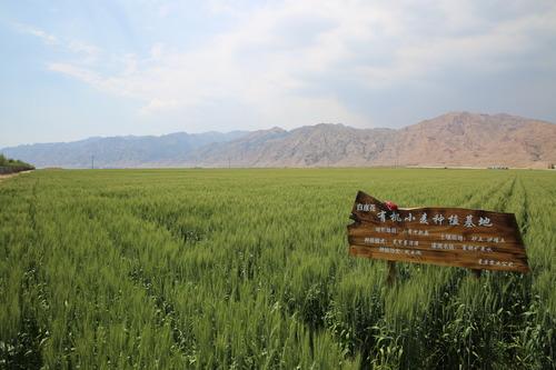 """中国河套平原给化肥污染开""""药方"""""""