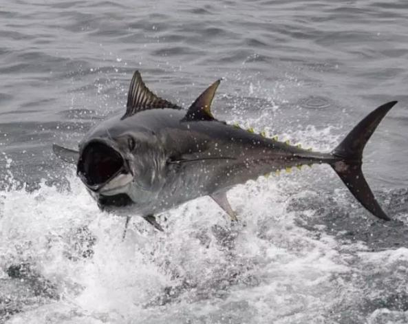"""专家提醒,传统鱼线淘汰了,""""金刚丝""""震撼垂钓界,比钢丝更厉害"""