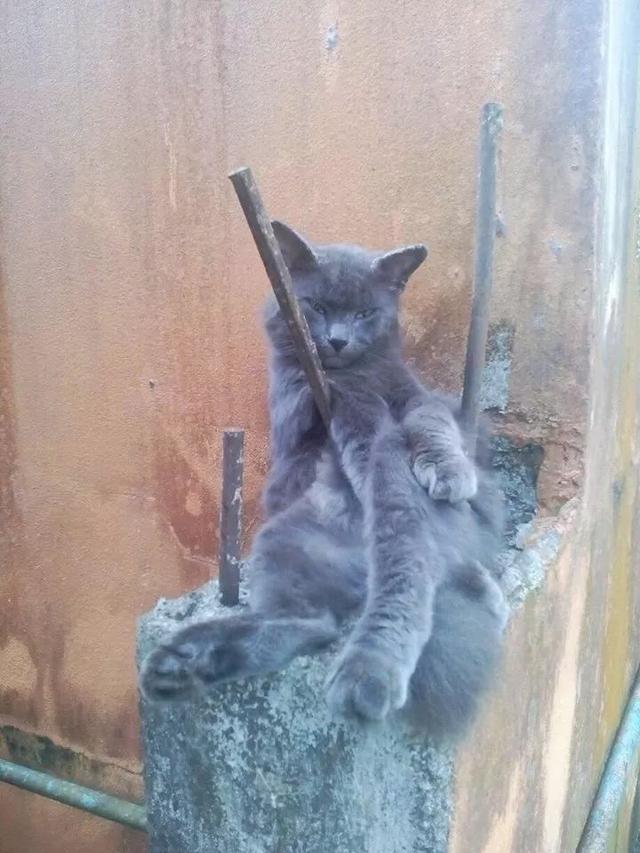猫咪对家里的床不满意,新找的床垫差点把铲屎官吓哭……