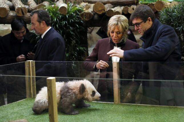 """法国为它花2亿""""建房"""",拥有独一无二的徽章,珍稀动物的典范"""