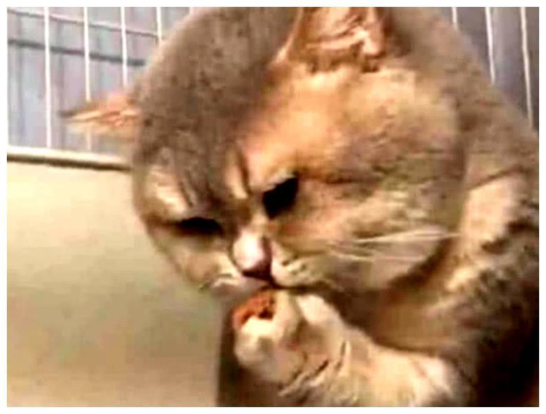 猫咪一门心思吃鱼罐头,吃到底时却被大脸卡住,随后的做法机智