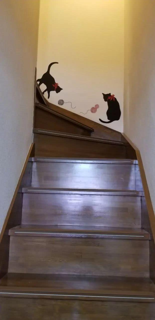 猫奴买了印着猫的墙纸,主子看见就不干了