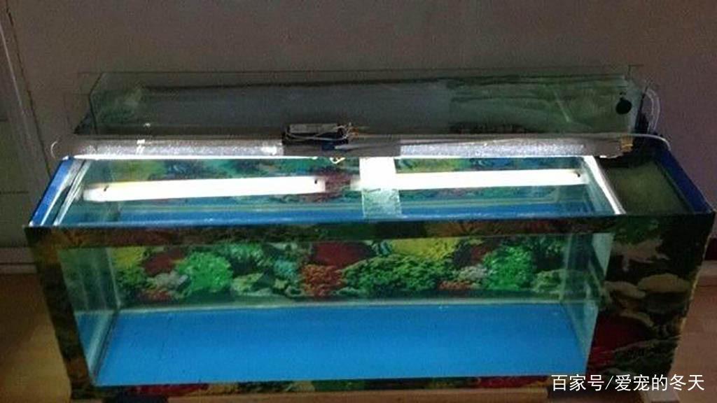 如何挑选合适的过滤鱼缸?只需认准这个原则,让你养鱼无忧