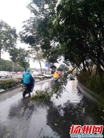 汽配城外断裂树枝挡道 绿化养护人员:将去现场清理