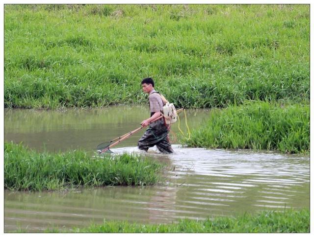 农民朋友,别电鱼了!国家出手了:轻者没收器具,重者移送公安!