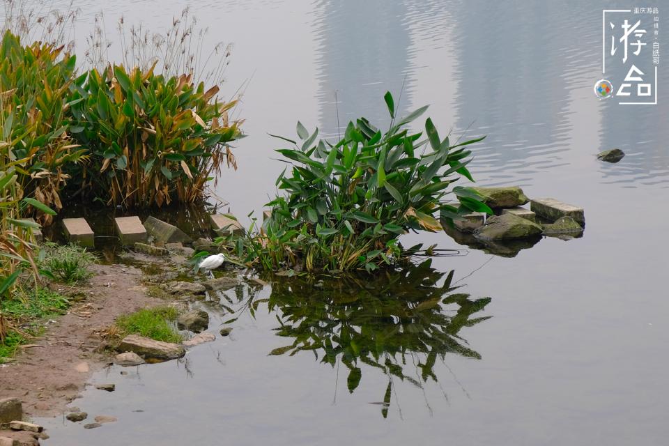 被误以为喷泉的神秘装置,重庆彩云湖为了环境,可是下了血本