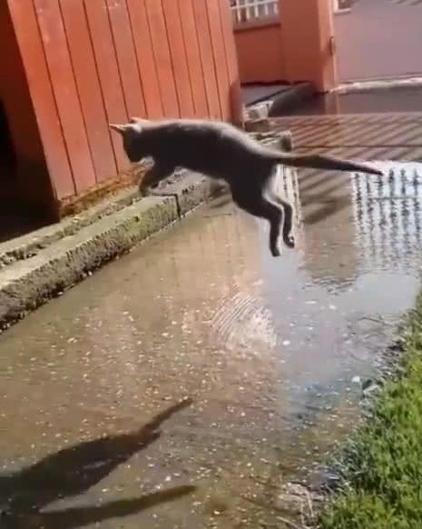 猫遇到水塘,奋力一跃轻松跳过,网友看傻眼:身体里装弹簧了?