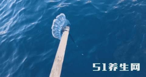 游客海岸边发现奇怪胶袋,阅历丰富的人称其暗藏剧毒_图4