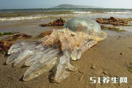 """海滩上发现大量""""胶袋"""",靠近后一看,令人不寒而栗!_图1"""