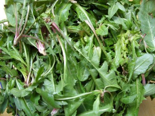 """天冷就吃这种""""野菜"""",种子撒一把,30天长成一盆"""