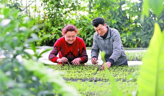 新疆乌什县:温室育苗忙