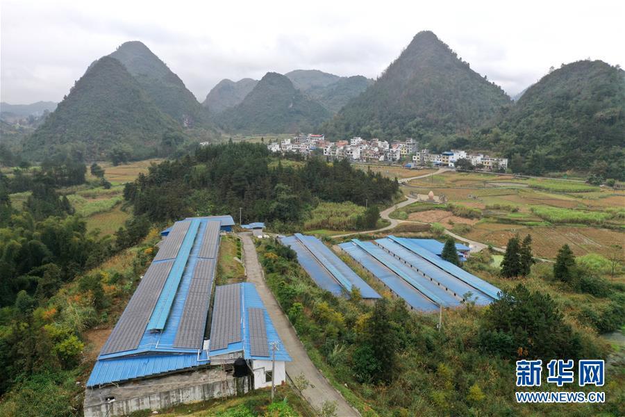 12月26日,村民在广西河池市金城江区五圩镇三境村凤飞三境循环农业(核心)示范区养殖棚舍内收集鸡蛋。
