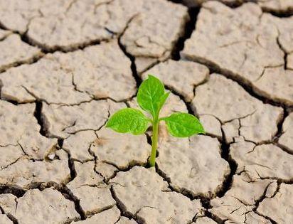 化肥用的太多,土壤受到破坏!这种情况该怎么防治?