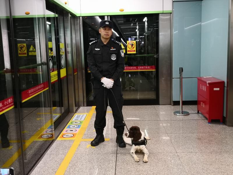 【今天我当班】又帅又可爱!广州地铁里的搜爆犬去年已检查箱包物品13.4万件次