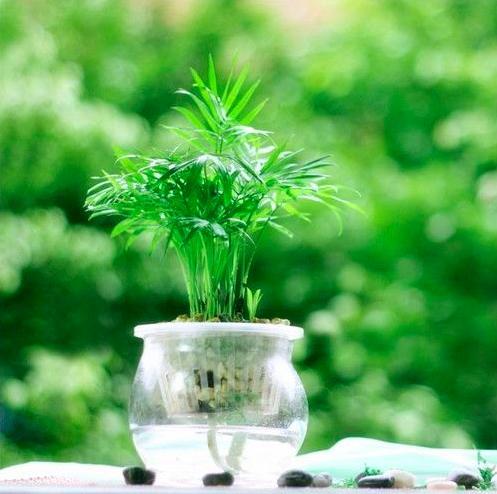 水培植物容器的选择很重要,根部的成长全靠容器决定