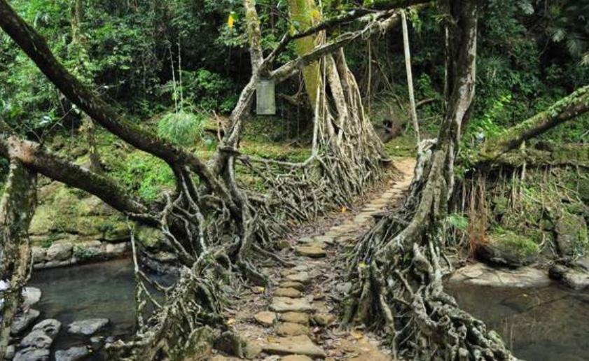 世界上最便宜的桥,没花一分钱买钢筋水泥,却越走越牢固