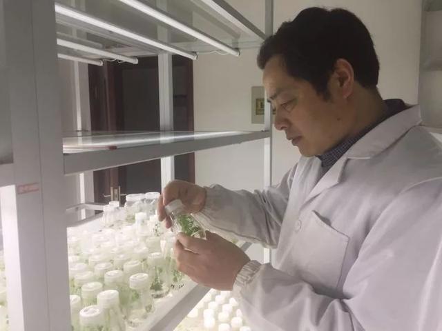 江苏大豆振兴第一步:蛋白质含量提高10%