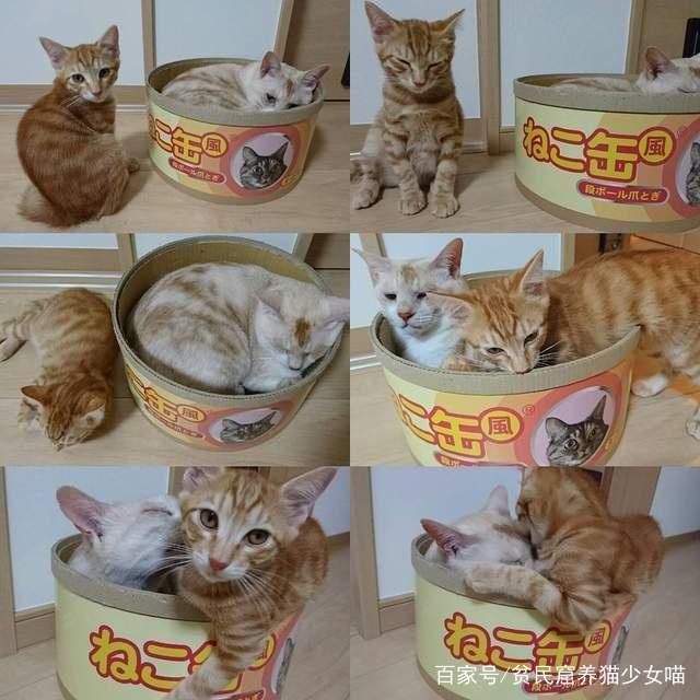 猫罐头,打开会有真正的猫咪现身哦,你不想来一个嘛..