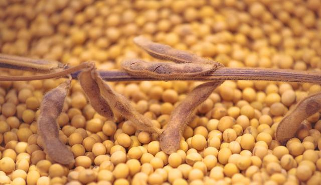 今年黑龙江地区大豆补贴比玉米高200元,玉米还值得种植吗?