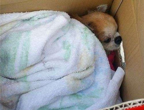 居民遛狗时发现奇怪胶袋,打开查看清楚后往医院赶去