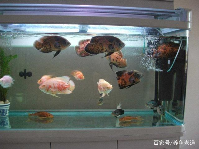 鱼缸可以有适当的过滤设备,但不是越多越好!