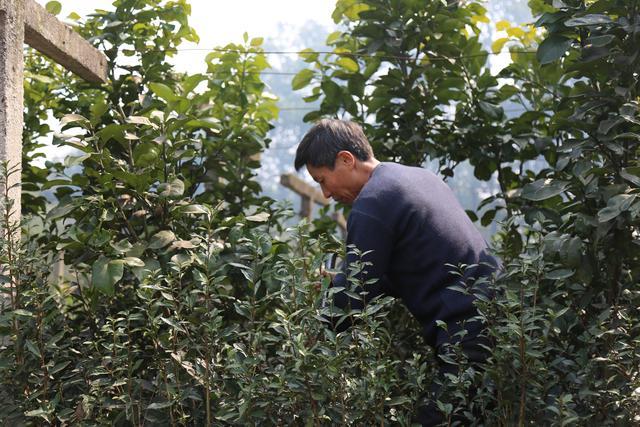 引种途中一见如故,园艺品种引种与研发之路上那些鲜为人知的事情