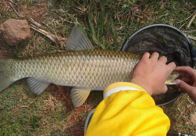 建议爱钓鱼的男士:平时少抽几包烟,拿下这新式渔具!功能真强大