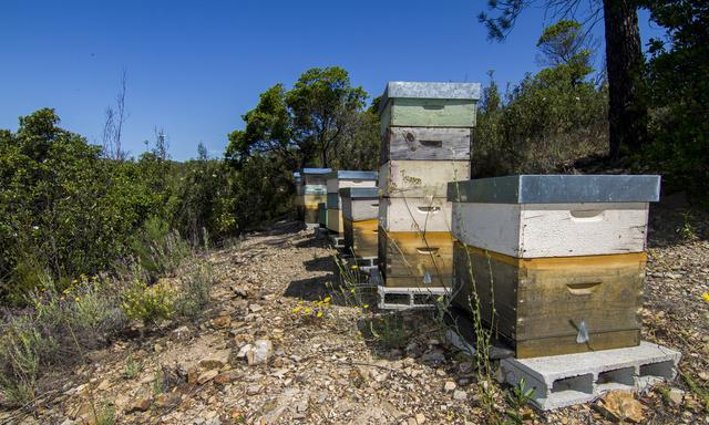 作为养蜂中常用的干燥消毒物,石灰对蜜蜂养殖影响有多大?
