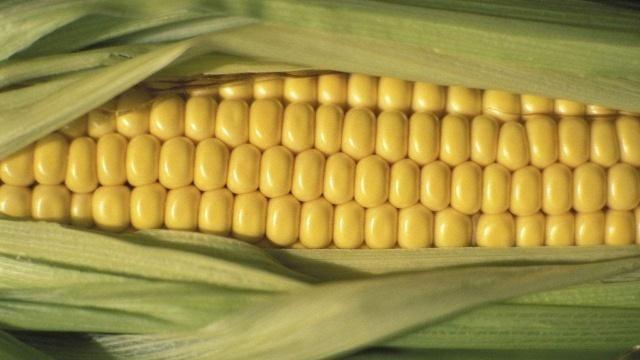 2019年,玉米和大豆生产者补贴指南,了解有好处!