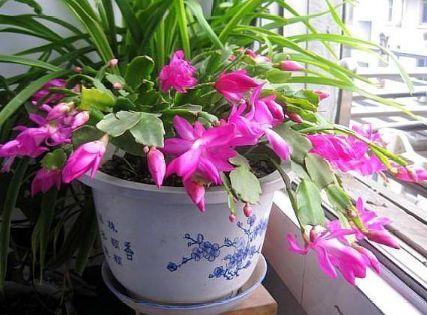 """冬季花卉花期后怎么养?喂1粒""""牙药"""",枝叶、花苞猛窜到春节!"""