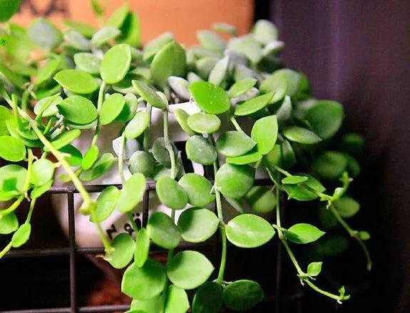 适合室内和窗台上养护的6种植物,喜欢光照又耐阴的盆栽