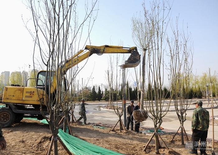 滨州植物园二期工程苗木栽植工作全面铺开 8月完工后达开放条件