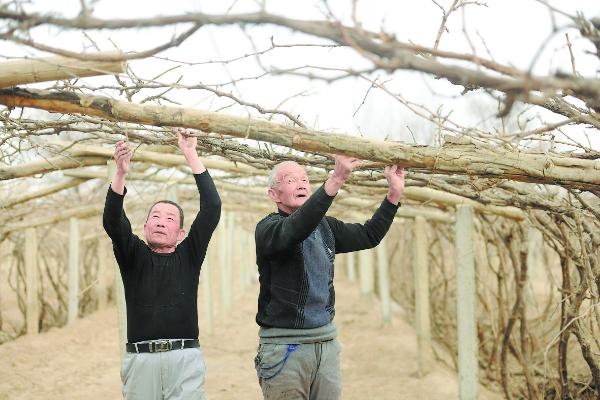 """【天山南北看亮点】吐鲁番市坚持""""强葡萄、精瓜菜、优畜牧"""""""
