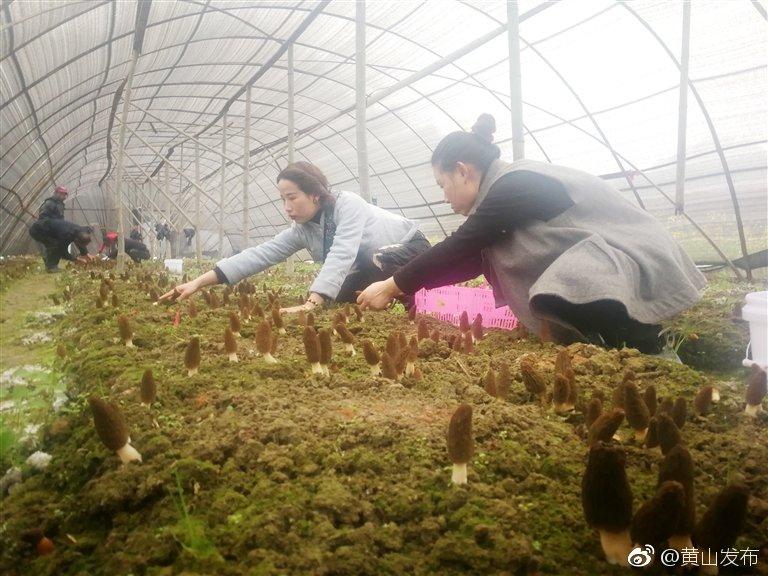 歙县:大力发展食用菌种植产业