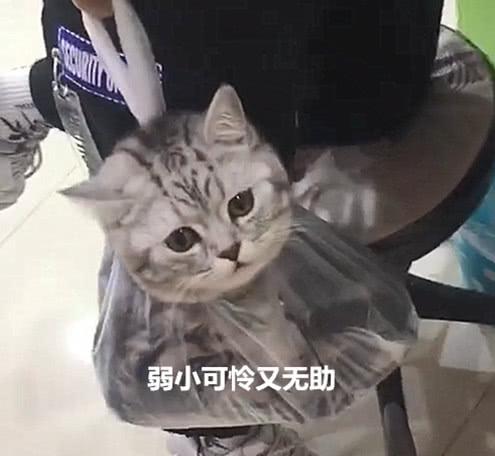 在超市看到零食后直抓狂,猫咪随后就被装进胶袋,表情让人笑疯