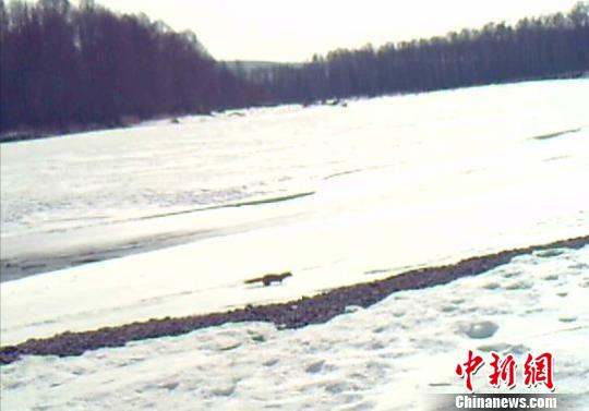 """世界珍贵毛皮动物水獭""""定居""""内蒙古"""