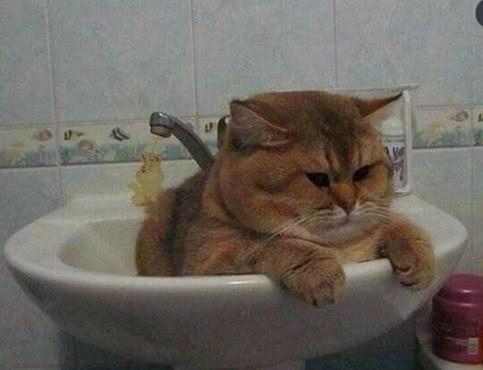 猫咪被抱进洗脸盆中洗澡,一脸气愤瞪着主人:没看到盆不够大吗