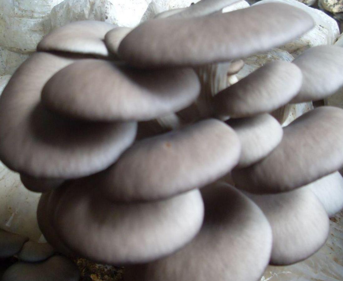 干炸蘑菇时, 想要黄金酥脆, 掌握这一个小技巧, 蘑菇比肉还好吃