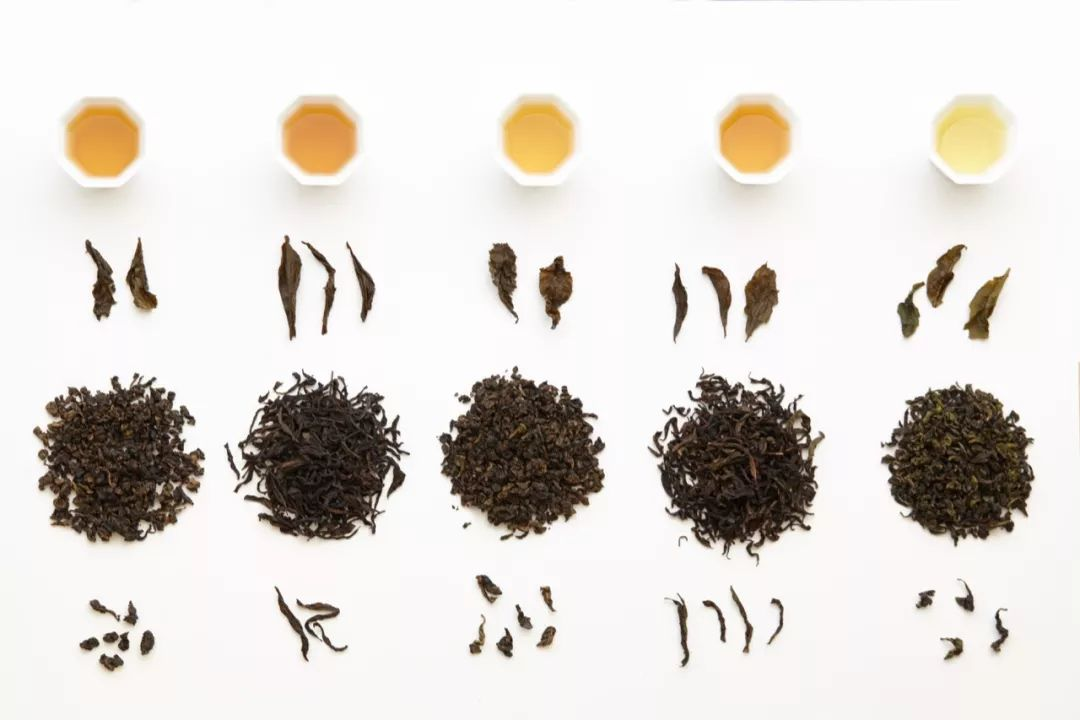 春日茶会,一次带上五种乌龙茶