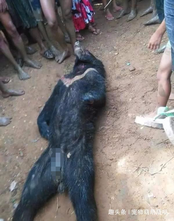 家禽频繁被盗?村民组建搜捕队,凶手被围殴致死,却面临全村罚款