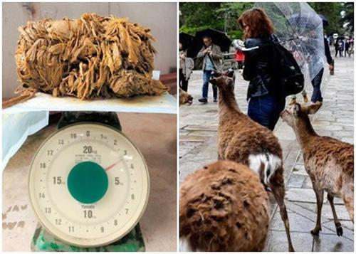 日本奈良公园一只鹿因身体衰竭死亡 胃部竟塞满重达3.2公斤胶袋