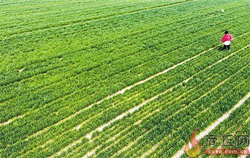 一季度农业农村经济起步扎实  ?小麦如期返青 家禽养殖效益较好