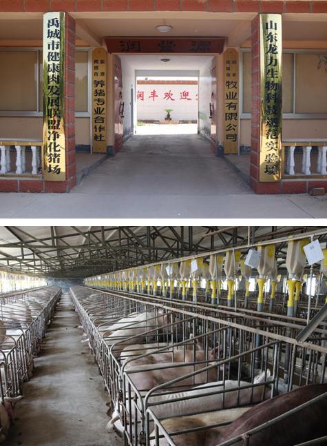 太阳鸟论坛:龙力生物力推生态养殖,肉食健康原料控制