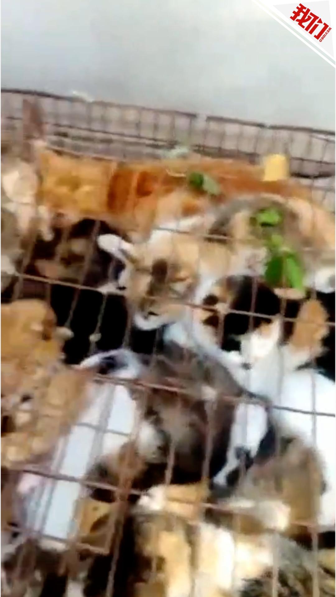 聊城数百只猫面临屠杀? 畜牧局:商贩收猫卖高价无屠杀