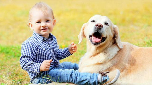 狗狗不是玩具,不能说丢就丢