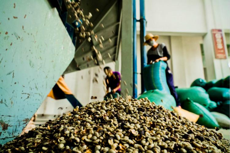 咖农几乎沦为免费劳动力 咖啡利益链条亟待打破