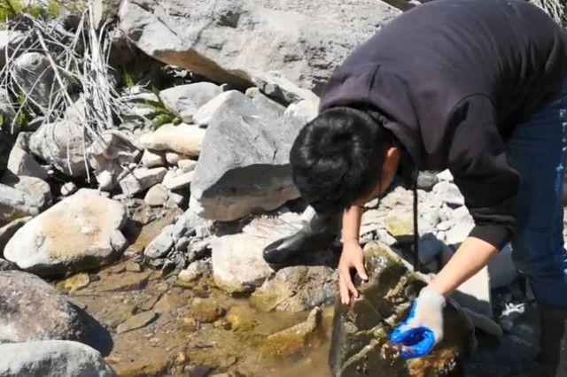 山溪里面原来有这种好货,是跌打药水的原料,小伙一次抓十几斤