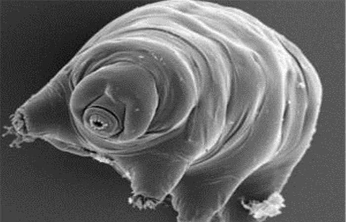它在地球上生活了5亿年,耐火烧耐低温,天敌那是不存在的!