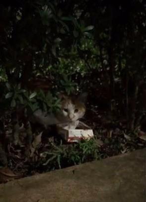 霸气流浪猫等路人喂罐头,豪迈地张开双腿,肚子上的肥肉都拖地了