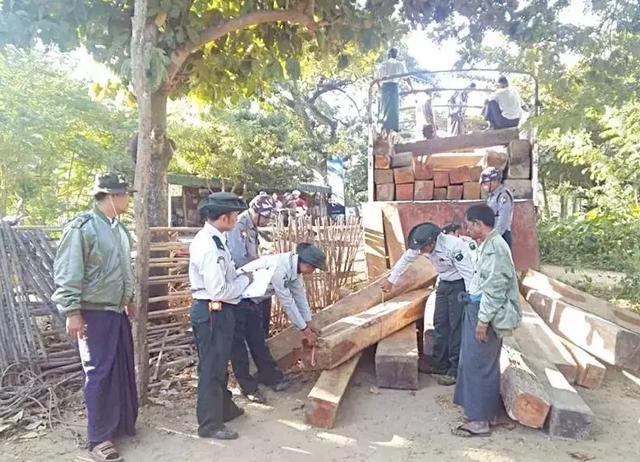 缅甸木材走私到底有多猖狂?一个省,一年查获1900吨